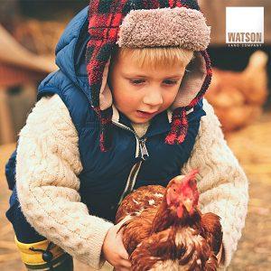 Chino's 4-H champ raising hens
